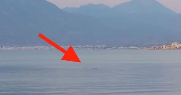 Πανικό προκαλεί καρχαρίας σε παραλία της Κορίνθου