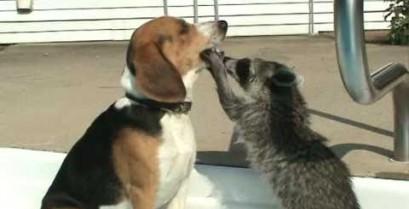 Ένας σκύλος στον οδοντίατρο (Βίντεο)
