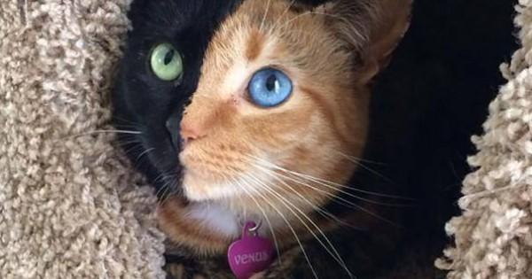 17 φωτογραφίες μιας γάτας που δεν έχει καμία σχέση με όλες τις άλλες, αλλά είναι εξίσου πανέμορφη (Εικόνες)