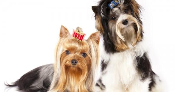 Γιατί πέφτουν οι τρίχες του σκύλου τόσο πολύ;