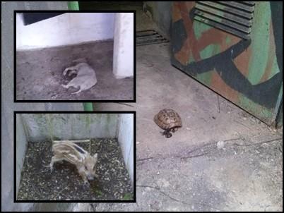 Παγίδες- θανάτου για τα ζώα τα ανοιχτά πολυβολεία (Εικόνες)