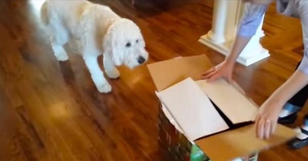 Έδωσαν στο σκύλο ένα κουτί με δώρο-έκπληξη για τα γενέθλιά του. Αυτό που είχε μέσα; Δε θα το πιστεύετε! (Βίντεο)