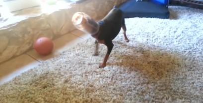 Οι ατυχίες των σκύλων (Βίντεο)
