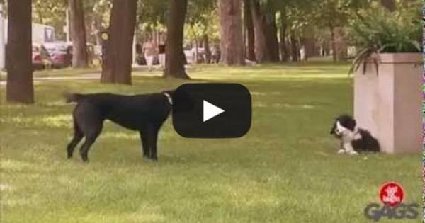 Ο σκύλος – ψέμα που κάνει πλάκα σε άλλους σκύλους είναι ό,τι πιο αστείο έχετε δει (video)