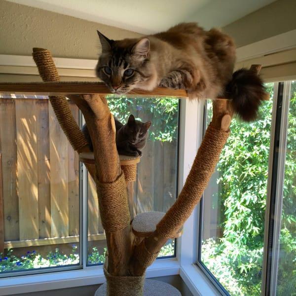 παιχνίδι Εικόνες γάτες Γάτα