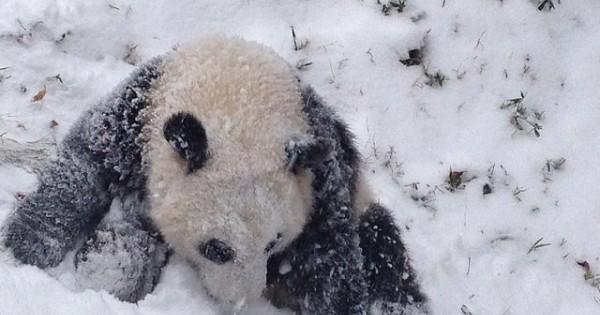 Ένα πάντα βλέπει χιόνι για πρώτη φορά  (Βίντεο)