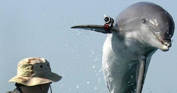 Παλαιστίνιοι έπιασαν δελφίνι που είχε στρατολογηθεί από το Ισραήλ!