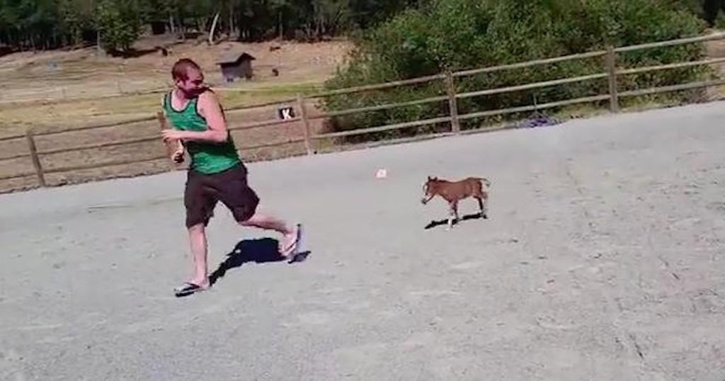 μίνι αλογάκι Βίντεο