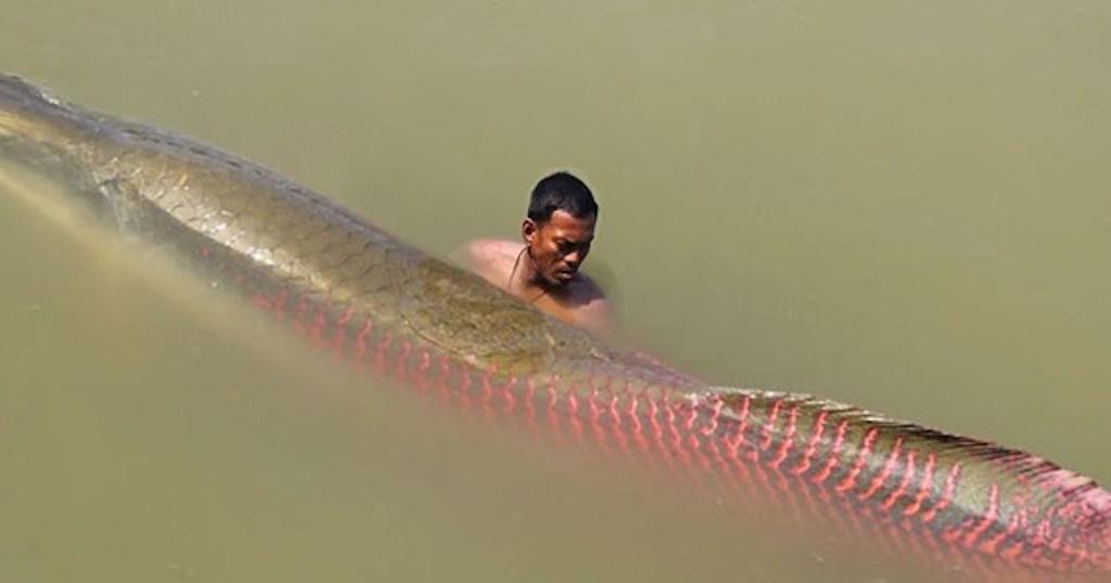 Βίντεο Αμαζόνιος