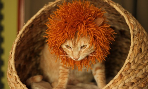 Γατάκι ή λιονταράκι; (Εικόνες)