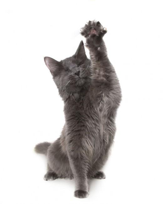 Ψώρα Σκύλος πλάσματα Γάτα