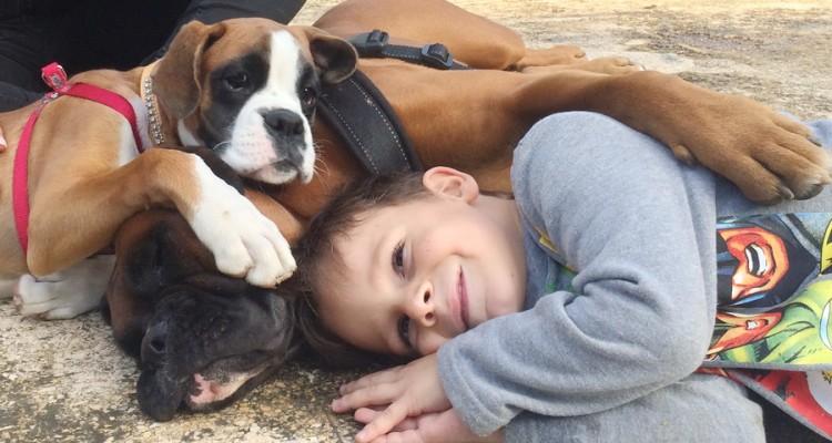Σκύλος παιδιά κατοικίδιο κατοικίδια έρευνα Γάτα