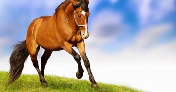Άνθρωποι και άλογα έχουν παρόμοιες εκφράσεις