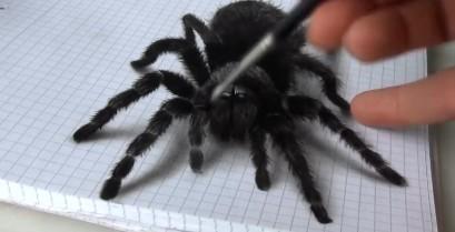Μια αράχνη σε τρισδιάστατη ζωγραφιά (Βίντεο)