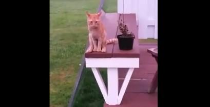 Μια γάτα κάθεται σαν άνθρωπος (Βίντεο)