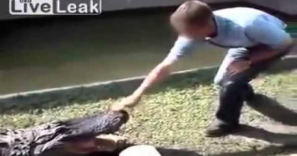 Βίντεο: Έκανε τον έξυπνο στον αλιγάτορα αλλά αυτός ήταν πιο γρήγορος! – Δείτε τι έπαθε