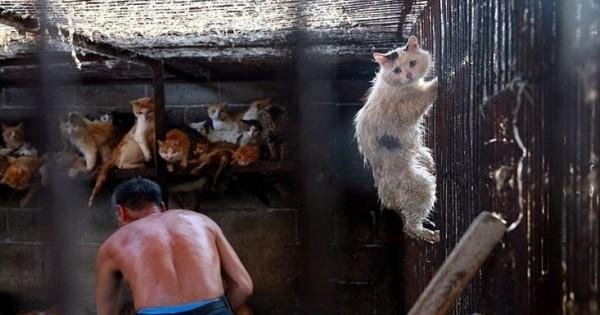Τρόμος και απελπισία στο βλέμμα της γάτας
