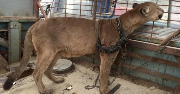 Αυτή η οργάνωση απελευθερώνει ζώα που ήταν υπό αιχμαλωσία – Οι εικόνες είναι καθηλωτικές