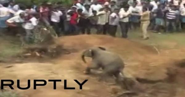 «Αχάριστο» ελεφαντάκι: Το έβγαλαν από το πηγάδι κι εκείνο τους…. κυνήγησε (βίντεο)