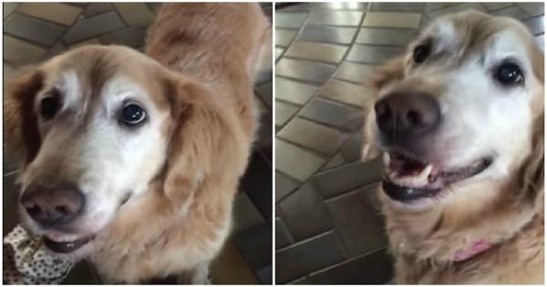 Πρέπει να δείτε την «αντίδραση» αυτού του σκύλου όταν έμαθε πως δεν έχει τελικά καρκίνο (Εικόνες, Βίντεο)