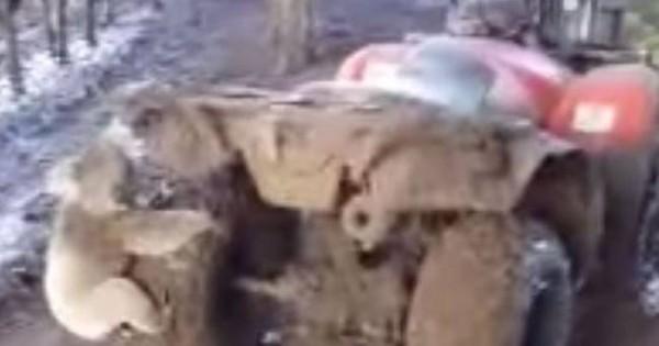 Πρωτοφανές: Κοάλα παίρνει στο κυνήγι αγρότη για να…
