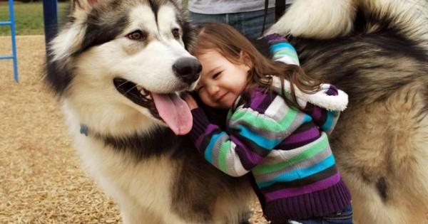 Έρευνα: Πώς οι σκύλοι βοηθούν τα παιδιά με αυτισμό