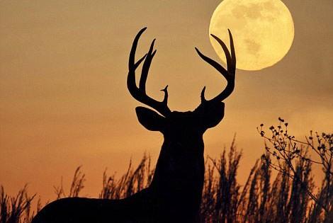 Εντυπωσιακές εικόνες: Φιγούρες ζώων με φόντο την ανατολή και δύση του ήλιου!