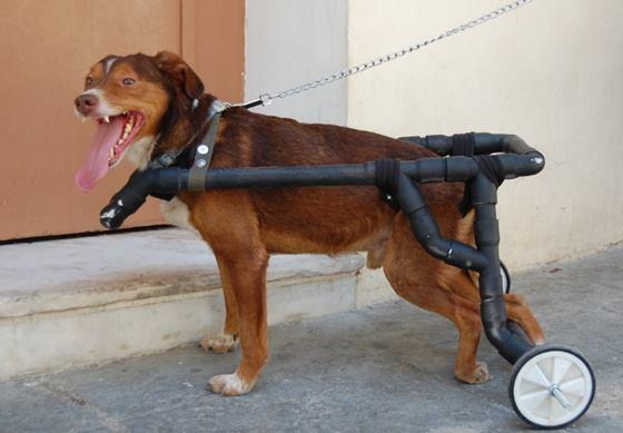 υδραυλικός ανάπηρα σκυλάκια