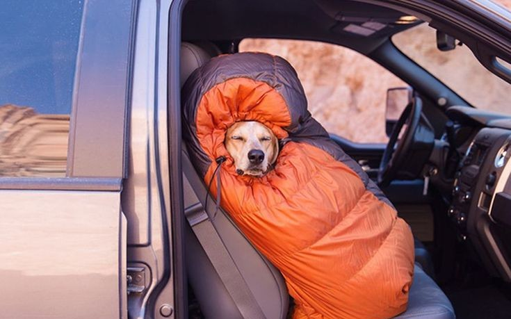 Πηγαίνοντας για camping με το σκύλο μου (Εικόνες)