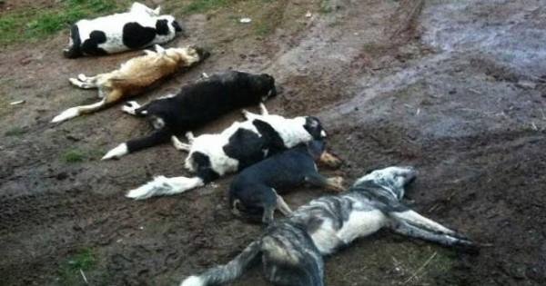 Επιστολή στις ευρωπαϊκές αρχές για τις μαζικές δηλητηριάσεις ζώων στην Ελλάδα