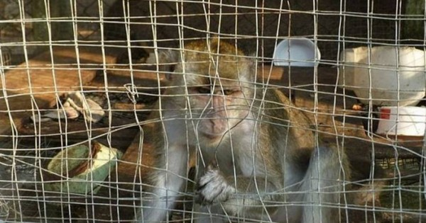 O ζωολογικός κήπος από την Κόλαση στο Βόρνεο (φωτο)