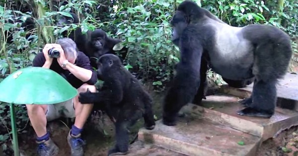 Βγάζει φωτογραφίες από το δάσος. Είχε όμως μια αναπάντεχη συνάντηση! (Βίντεο)
