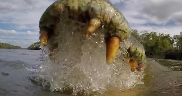 Πως είναι να βρίσκεστε μέσα στα σαγόνια ενός κροκόδειλου; Το National Geographic μας δίνει την απάντηση. (Βίντεο)