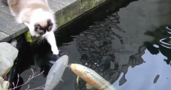 Ο γάτος αυτός δίνει φιλάκια σε… ψάρια! (Βίντεο)