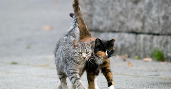 Στην Αμερική εκατομμύρια σκύλοι και γάτες υποβάλλονται κάθε χρόνο σε ευθανασία γιατί κάποιοι είναι ακόμα κατά της στείρωσης.
