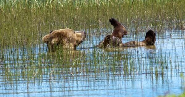Αρκούδα απολαμβάνει το μπάνιο της. Θα τη λατρέψετε! (Εικόνες)
