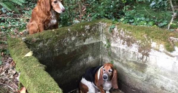 Σκυλί – άγρυπνος φρουρός έμεινε δίπλα στον παγιδευμένο φίλο του (Εικόνες)