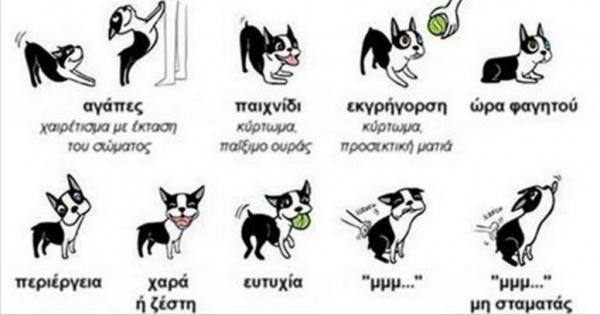 Η γλώσσα του σώματος ενός σκύλου! (Εικόνες)