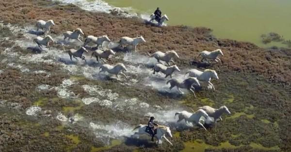Τα άλογα των Ονείρων μας: Ένα βίντεο έπος προς τιμή τους. (Βίντεο)