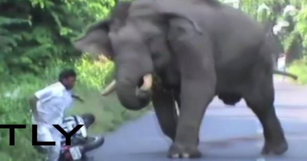 Ελέφαντας εκτός ελέγχου κυνηγά μοτοσυκλετιστή σε δρόμο (vid)