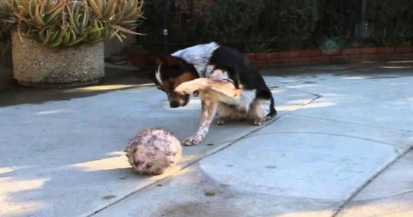 Πολλά σκυλιά κάνουν τρικ. Αυτό που κάνει όμως αυτό το σκυλί δεν το έχετε ξαναδεί! (Βίντεο)