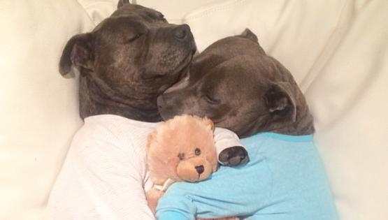 Θα «πέσει» το ίντερνετ μόλις δείτε αυτά τα αξιολάτρευτα σκυλάκια με τις πιτζάμες τους! (Εικόνες)