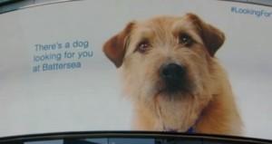 Τι γυρεύει ένας σκύλος μόνος σε εμπορικό κέντρο; (Βίντεο)