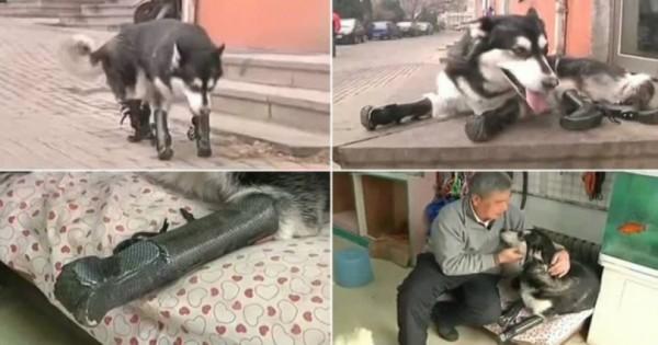 Σκύλος Μαχητής: -Του έκοψαν όλα τα πόδια αλλά κατάφερε να περπατήσει ξανά (βίντεο)