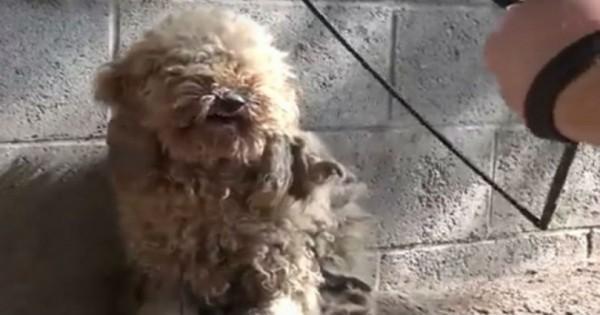 Διέσωσαν ένα τρομοκρατημένο σκυλάκι και το μεταμόρφωσαν! Πρέπει να το δείτε πως έγινε! (Βίντεο)