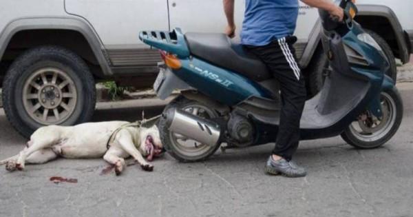 Σοκ στην Ηλεία: Έσερνε με μοτοσικλέτα έναν σκύλο
