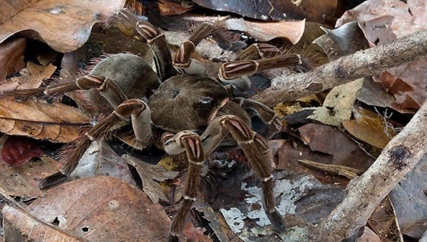 αράχνες