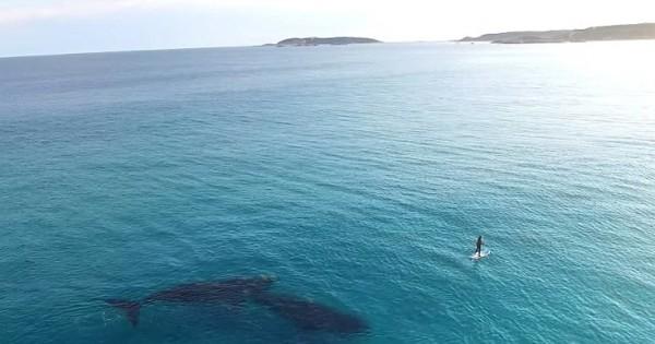 Μια μαγική συνάντηση στη θάλασσα (Βίντεο)