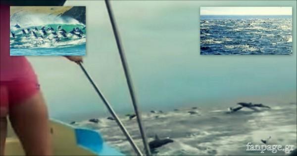 Απιστευτο φαινομενο στην βραζιλία με Δελφίνια…! (Βίντεο)