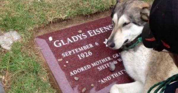 Έχει προκαλέσει συγκίνηση στο διαδίκτυο – Σκύλος σπαράζει στον τάφο του αφεντικού του [βίντεο]
